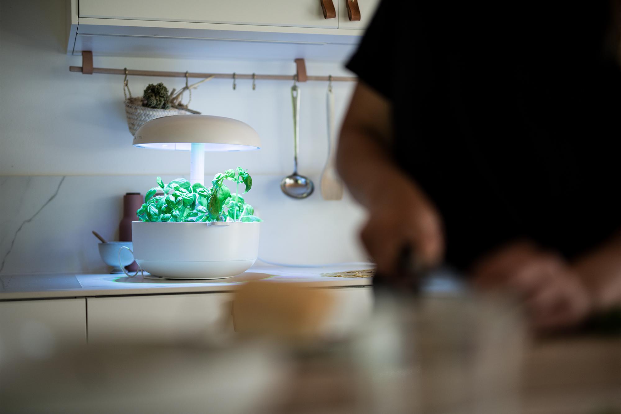 Das Rezept zum leckeren Cashew-Basilikum-Pesto | apinchofstyle.com